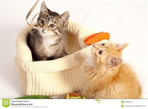 Two Cute Playful Kittens Stock Images  Image 24585034