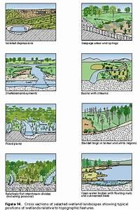 Wetlands Ecostudy Unit