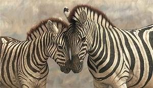 File:Zebra with young painting.jpg - Wikimedia Commons
