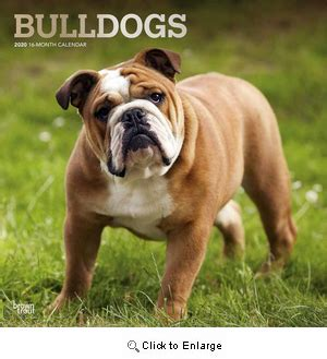bulldogs calendar animal den