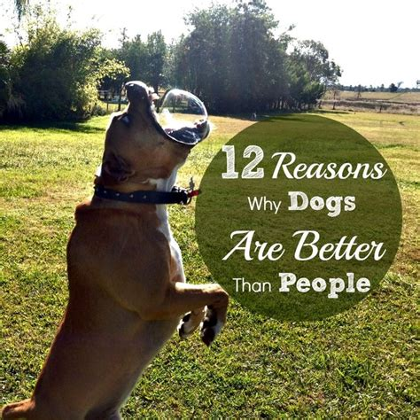 better dogs than why cats reasons essay simone funny dog words puppies nina