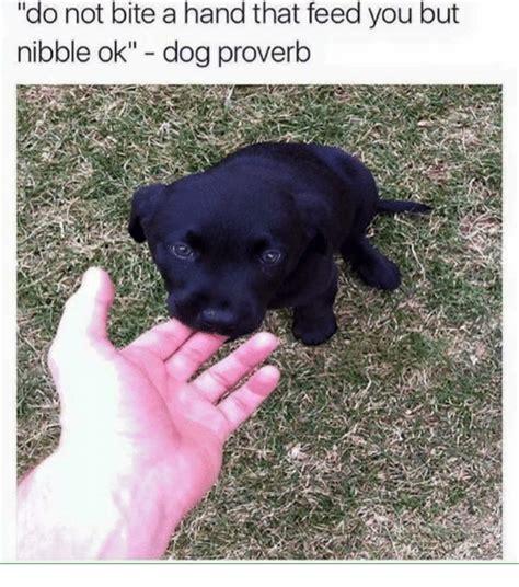 Dog Bite Meme - funny hand memes of 2017 on sizzle dank