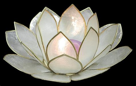 lotus candle holder shell candle holders