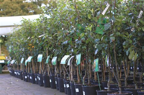 Image result for fruit tree sales manatee