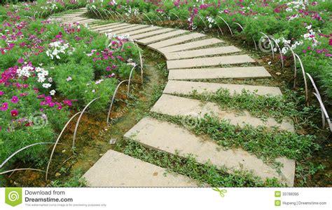 cuisiner avec des fleurs chemin en avec des fleurs image stock image 33788395