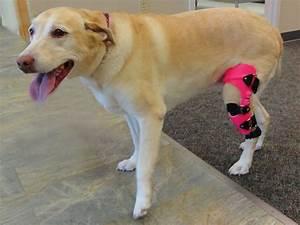 search q=Dog Brace for ACL Tear&FORM=RESTAB