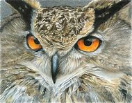 Owl Colored Pencil Drawing