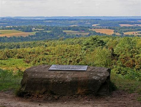 Ashdown Forest, The Real 100 Acre Wood, Pooh's Thoughtful