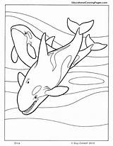 Whale Coloring Pages Getcolorings Printable sketch template