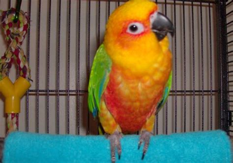 pet parrot how to care for your pet parrot in winter animal bliss