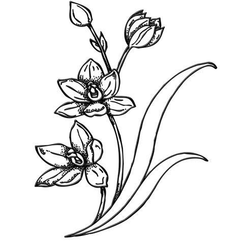 bunga taman tanaman m usim gambar gratis pixabay