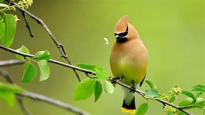 Birds Resolution Bird Desktop Attractive Wallpapers Amazing