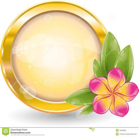 gold circle frame  pink frangipani flower stock