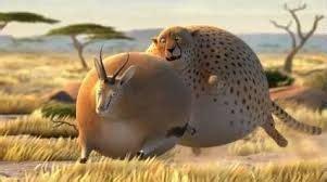 fat cheetah chasing fat antelope fat animals animaux