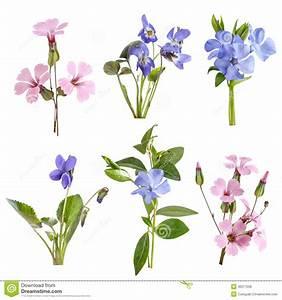 Wildflowers Set Isolated Royalty Free Stock Image - Image ...