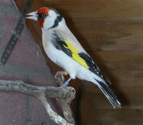 birds prestige birds limited