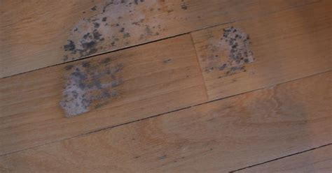 wood floor stain removal remove mold stains from wood floors stains remove mold stains and to remove