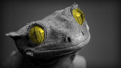 Posted by nur fildzhah willyanda posted on oktober 26, 2019 with no comments. Bearded Dragon Wallpaper ·① WallpaperTag