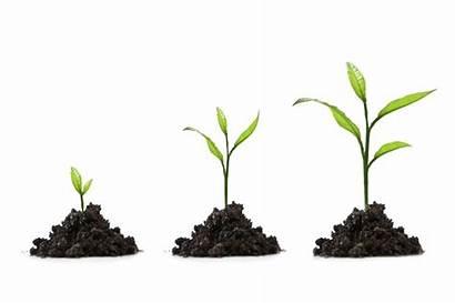 Tree Growing Grow Growth Start Development Seo