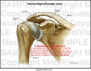 Right Shoulder Joint Anterior View