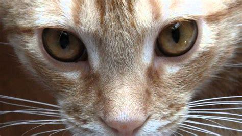 eliot cat macavity mystery read