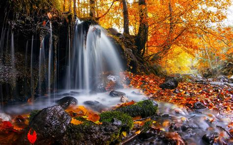 Nature Landscape Waterfall Trees Leaves Fall Moss