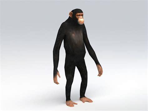animated chimpanzee rig  model ds maxautodesk fbx