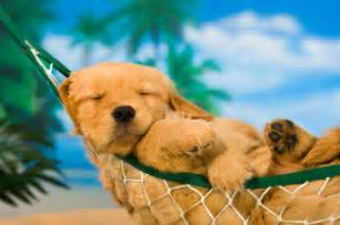 Image result for free image of lazy summer time