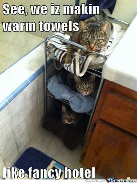 Fancy Cat Meme - fancy cat memes best collection of funny fancy cat pictures