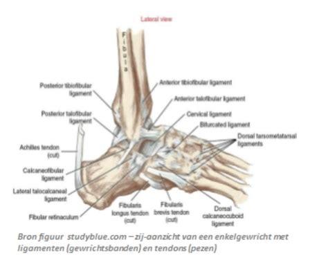 Pijn voet lopen
