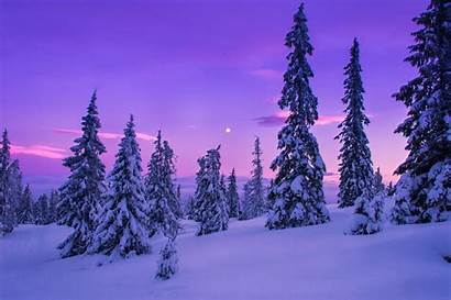 Winter Forest Landscape Snow Nature Desktop Wallpapers