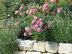 Begleitpflanzen Für Rosen : rosenbegleiter die sch nsten partner mein sch ner garten ~ Orissabook.com Haus und Dekorationen