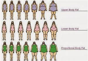 I Love Fun   Female Body Type Chart