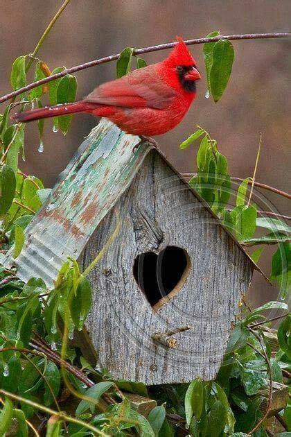 fathers favorites  red birds  bird houses birds cardinals pinterest