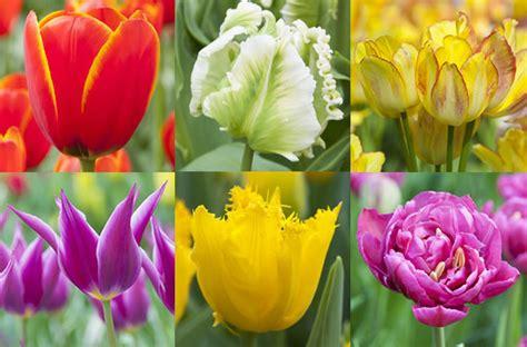 alle verschillende bloemen hoeveel soorten tulpen zijn er