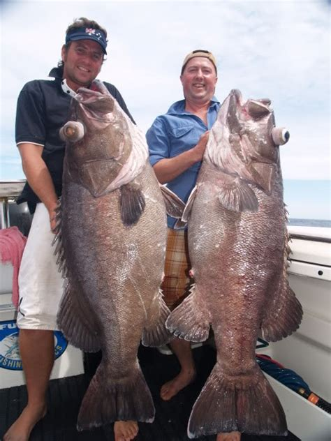 bass grouper potm dec michael fishwrecked submitted adam
