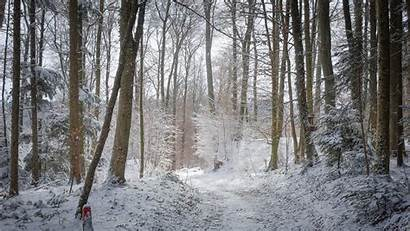 Forest Winter Background Poland Snow Backgrounds Nature