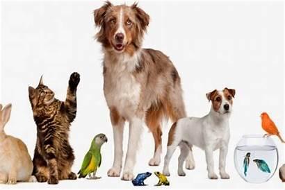Pets Pet Animals Animal Adoptions Names Organizations
