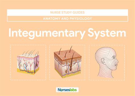 integumentary system anatomy  physiology nurseslabs