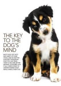 Burkes Backyard Dogs by Key To The S Mind Burke S Backyard