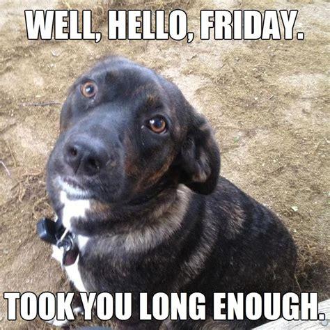 Friday Meme - happy friday dog memes image memes at relatably com