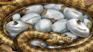 Black snake eggs pics wallpaper