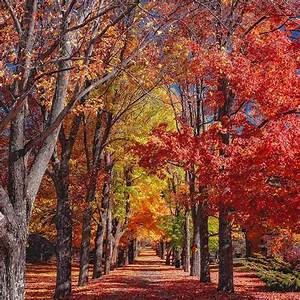 The, Science, Behind, Fall, Foliage