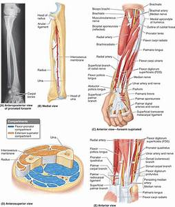 Picture Of Hand Bones And Muscles