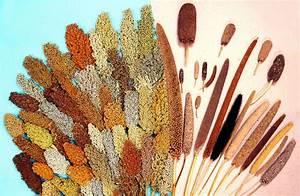 What Is Genetic Diversity