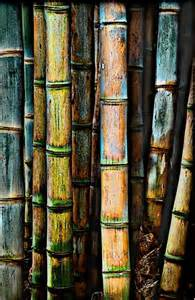 Bamboo Forest Colors