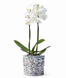 Orchidee Blüht Nicht Mehr : orchidee im holztopf jetzt bestellen bei valentins ~ Lizthompson.info Haus und Dekorationen