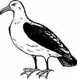 Albatross Drawing Seagull Clipart Clip Transparent Flying 2400px Drawings Designlooter Freepngimg 54kb 2340 Onlinelabels Getdrawings sketch template
