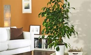 Zimmerpflanzen Für Dunkle Ecken : zimmerpflanzen ~ Michelbontemps.com Haus und Dekorationen