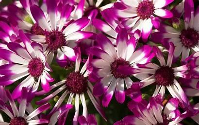 Flowers Purple Wallpapers 1920 1080 1200